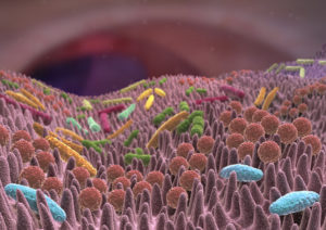 Darmgesundheit und Mikrobiom